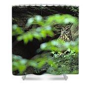 Owl In Woodland, Sachsische Schweiz Shower Curtain