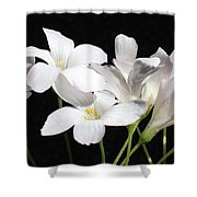 Oxalis Flowers 2 Shower Curtain