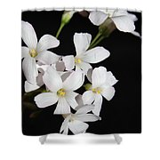 Oxalis Flowers 3 Shower Curtain