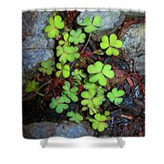 Oxalis Shower Curtain