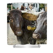 Oxen Pair Shower Curtain