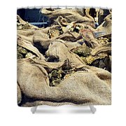 Oysters Galore Shower Curtain