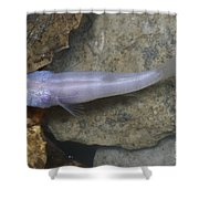 Ozark Blind Cavefish Shower Curtain