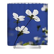Pacific Dogwood Blossoms Cornus Shower Curtain