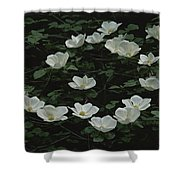 Pacific Dogwood Blossoms Shower Curtain