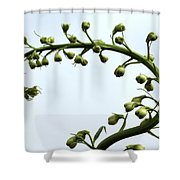Pacific Giant Astolat Shower Curtain