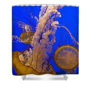 Pacific Sea Nettle Chrysaora Fuscescens Shower Curtain