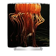 Pacific Sea Nettle Chrysaora Shower Curtain