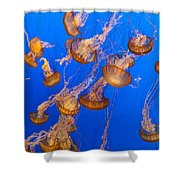 Pack Of Jelly Fish Shower Curtain