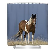 Paint Filly Before Shower Curtain