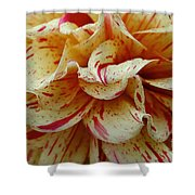 Paint Spattered Petals Shower Curtain