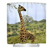 Painted Giraffe Shower Curtain
