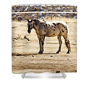 Painted Horses II Shower Curtain