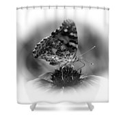 Painted Lady 1 Shower Curtain