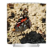 Painted Lady 8591 3341 Shower Curtain
