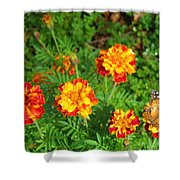 Painted Lady Butterfly In The Marigolds  Shower Curtain
