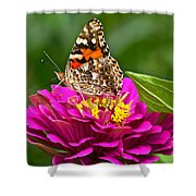 Painted Lady With Zinnia Shower Curtain