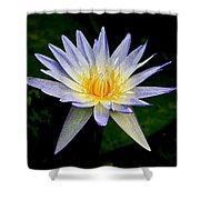 Painted Lily And Pads Shower Curtain