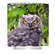 Painted Owl Shower Curtain