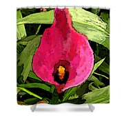 Painted Pink Cala Lily Shower Curtain