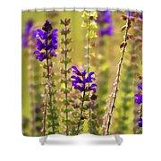 Painted Purple Sage Salvia Shower Curtain