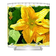 Painted Squash Blossoms Shower Curtain