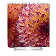 Painted Stacked Dahlias Shower Curtain