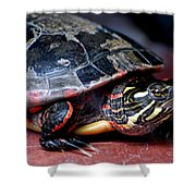 Painted Turtle Michigan Shower Curtain