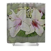 Painted Weigela Window Shower Curtain