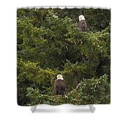 Pair Of Bald Eagles Shower Curtain by Darcy Michaelchuk