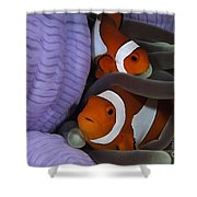 Pair Of Clown Anemonefish, Indonesia Shower Curtain
