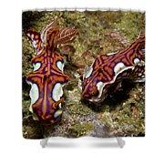Pair Of Miamira Magnifica Nudibranch Shower Curtain