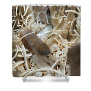 Pair Of Transluscent White Snapping Shower Curtain