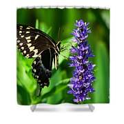 Palamedes Swallowtail Butterfly Shower Curtain