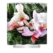 Pale Pink Phalaenopsis Orchids Shower Curtain