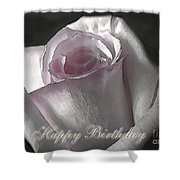 Pale Pink Rose Greeting Card.   Birthday Shower Curtain