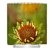 Pale Purple Coneflower Bud Shower Curtain
