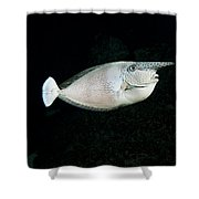 Paletail Unicornfish Shower Curtain