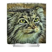 Pallas Cat Shower Curtain