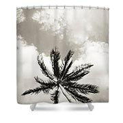 Palm And Sky Shower Curtain