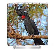 Palm Cockatoo Shower Curtain