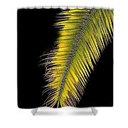 Palm Frond Against Black Shower Curtain