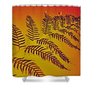 Palm Frond In The Summer Heat Shower Curtain by Kaye Menner