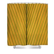 Palm Leaf Showing Midrib And Veination Shower Curtain