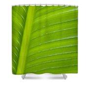 Palm Pattern Shower Curtain