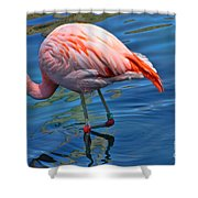 Palm Springs Flamingo Shower Curtain