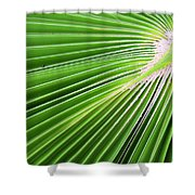 Palm Tree Frond Shower Curtain