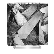 Palm Tree Macro Shower Curtain by Adam Romanowicz