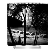 Palm Tree Silouette Shower Curtain