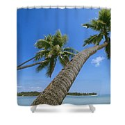 Palm Trees On A Tropical Beach, Fiji Shower Curtain